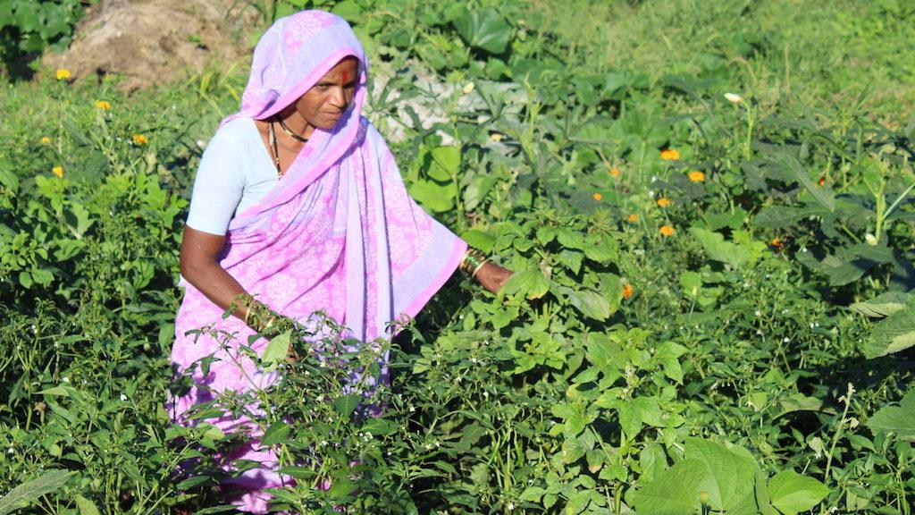 Ensuring nutrition through kitchen garden