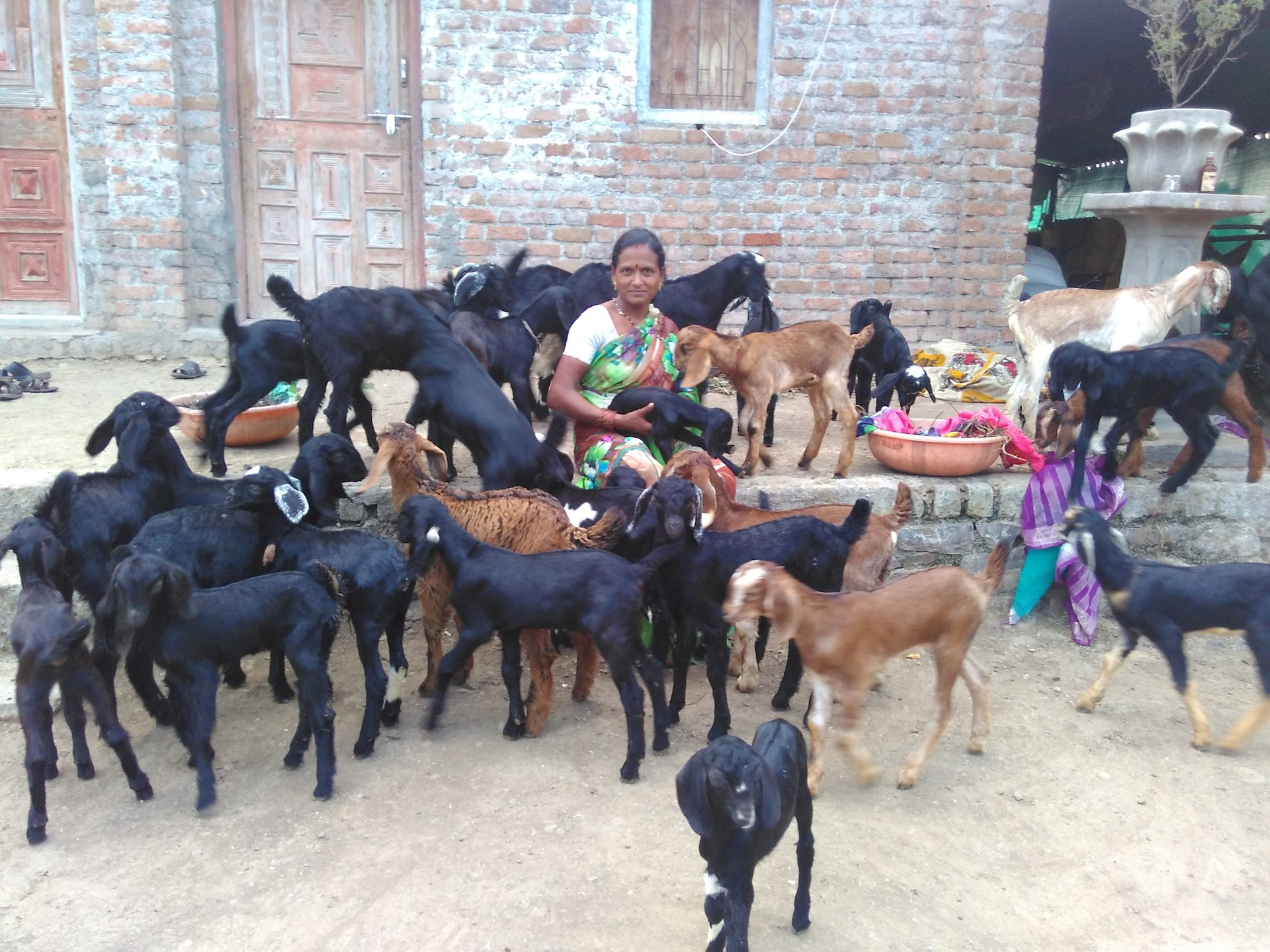 Goat Farming Project Report Pdf 2018